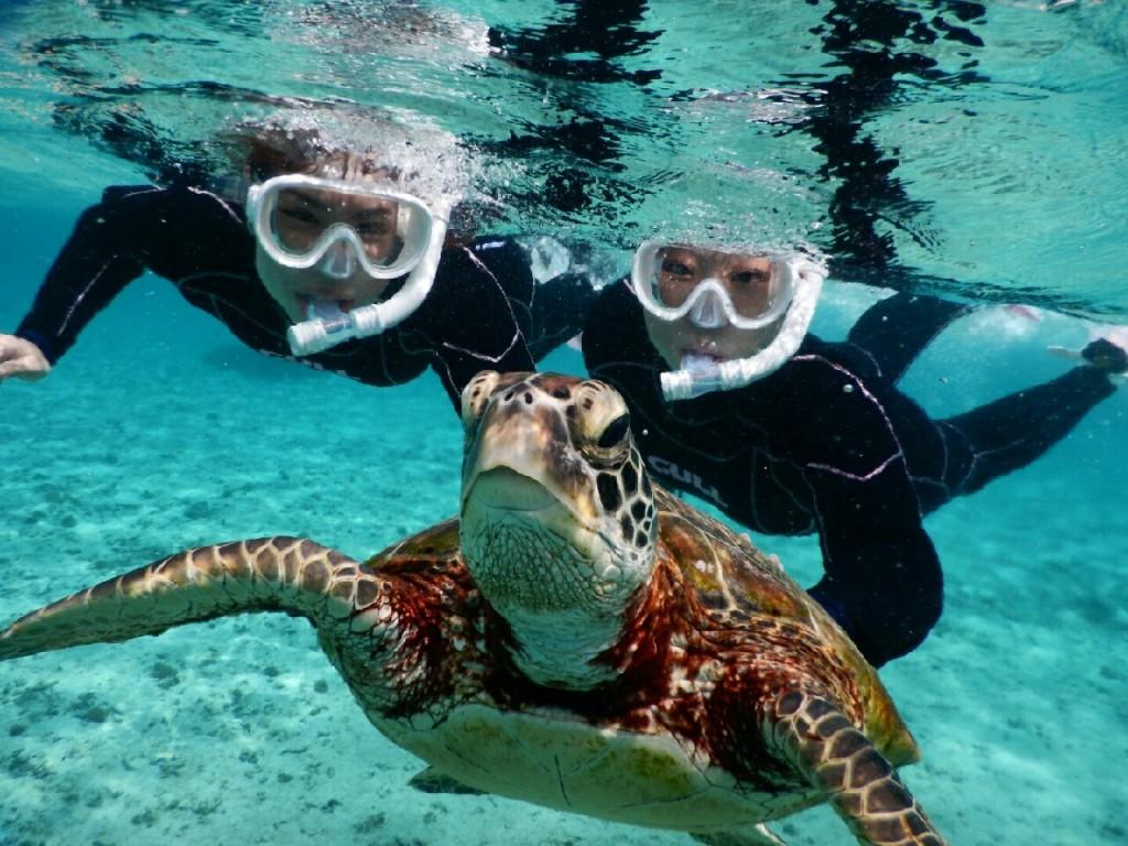 水面ギリギリでウミガメをみるシュノーケル