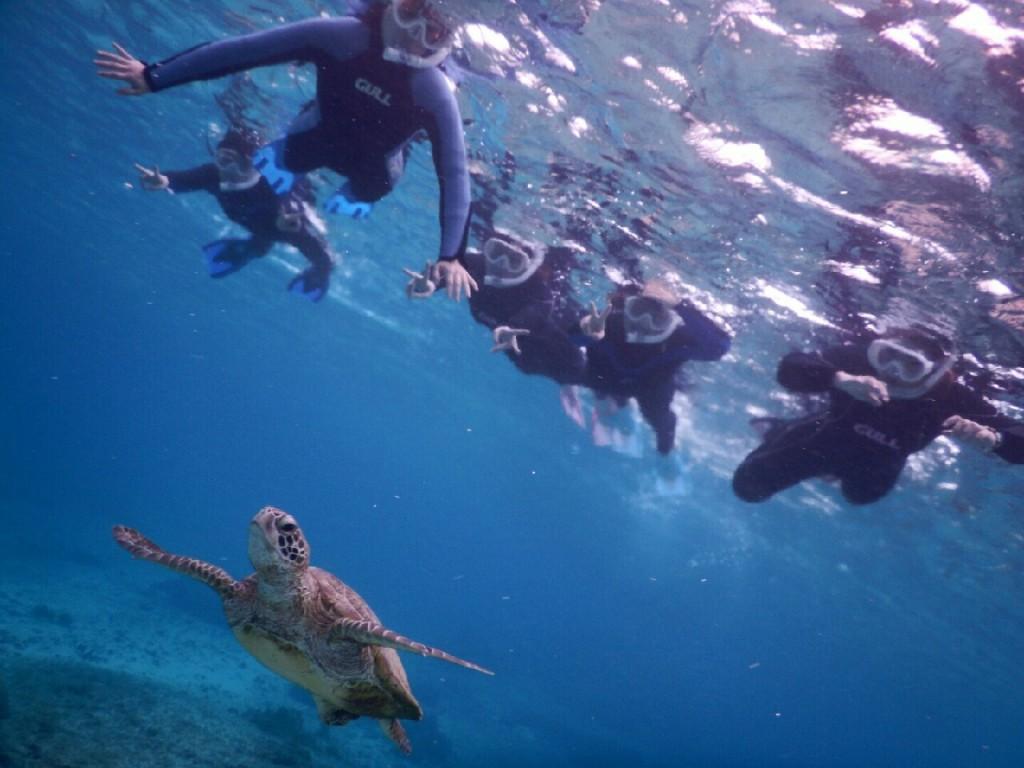 5人でウミガメを探しにシュノーケル