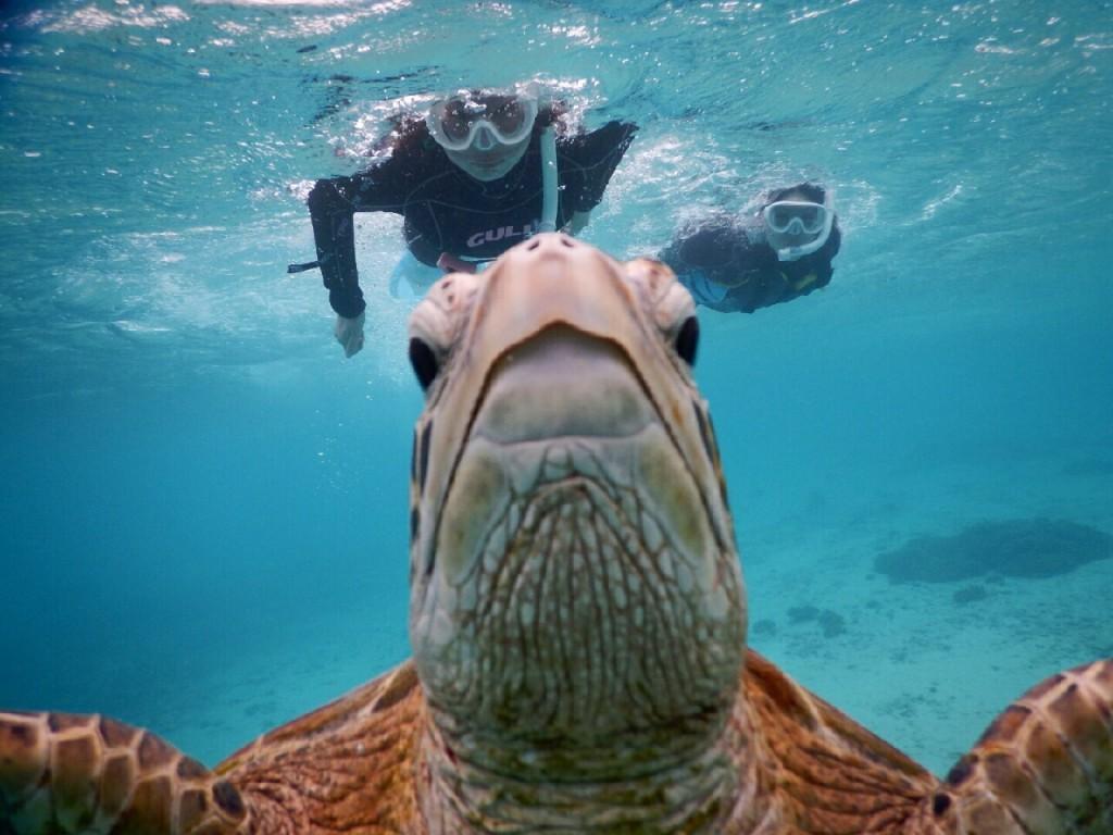 宮古島ウミガメのドアップ