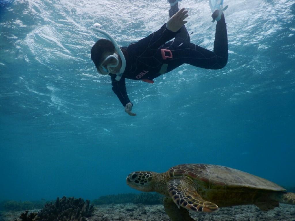 ウミガメと初のスキンダイビング