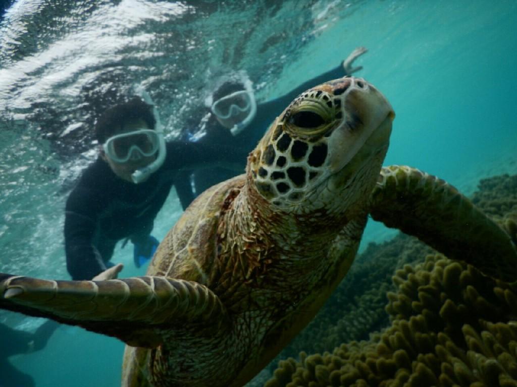 こんな浅場シュノーケルでウミガメさん