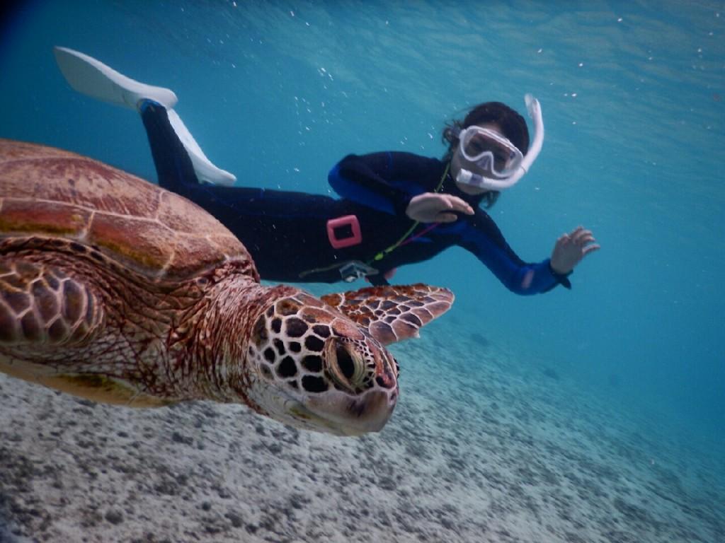 横からウミガメ撮影