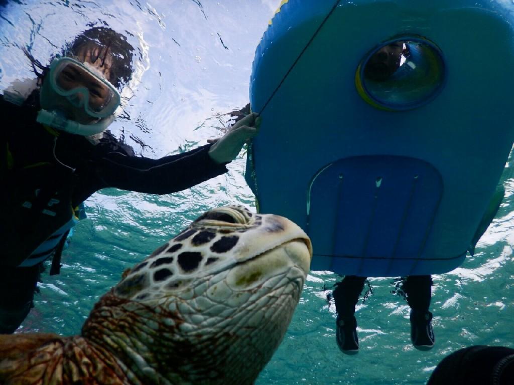宮古島ボートと箱メガネでウミガメ