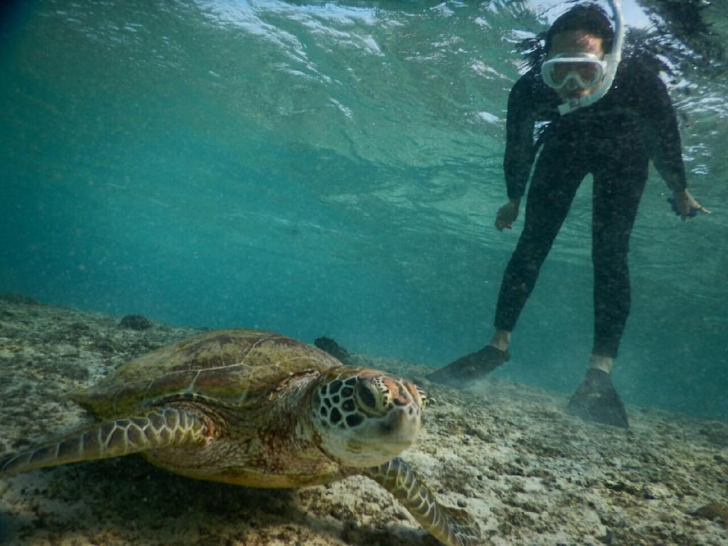 宮古島驚きのウミガメ立ち見シュノーケル