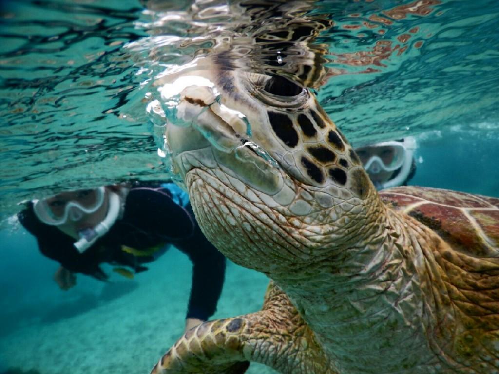 息がもれてる宮古島のウミガメ