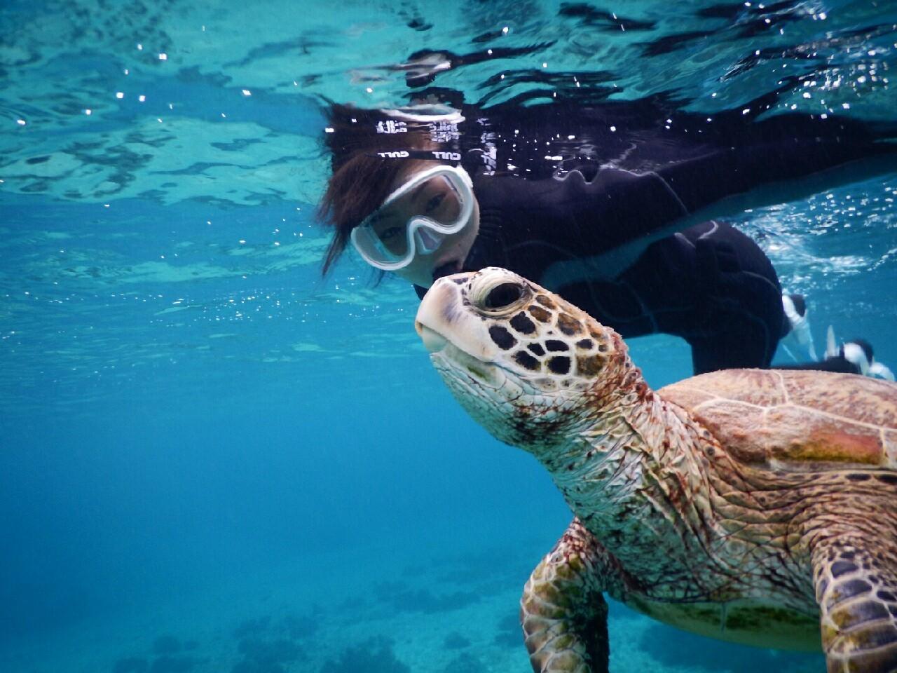 宮古島のウミガメをひとりじめ