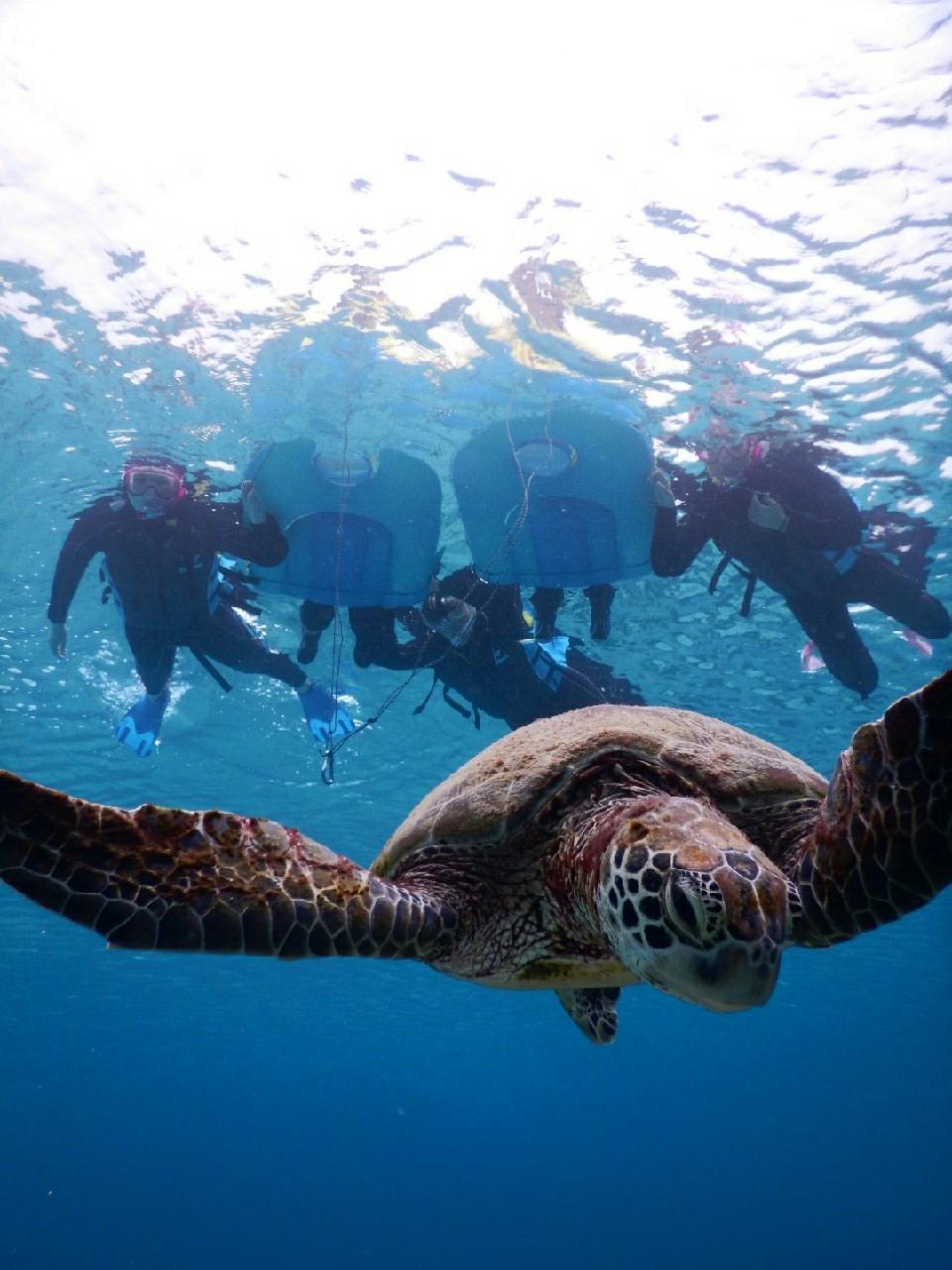 3世代宮古島ウミガメをみる