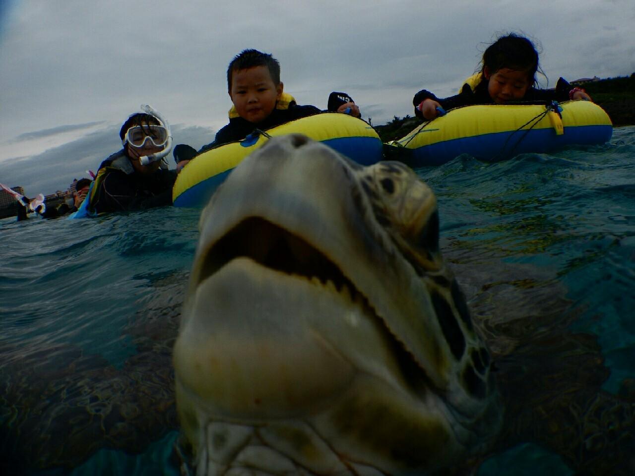 3才でウミガメの息継ぎ見る