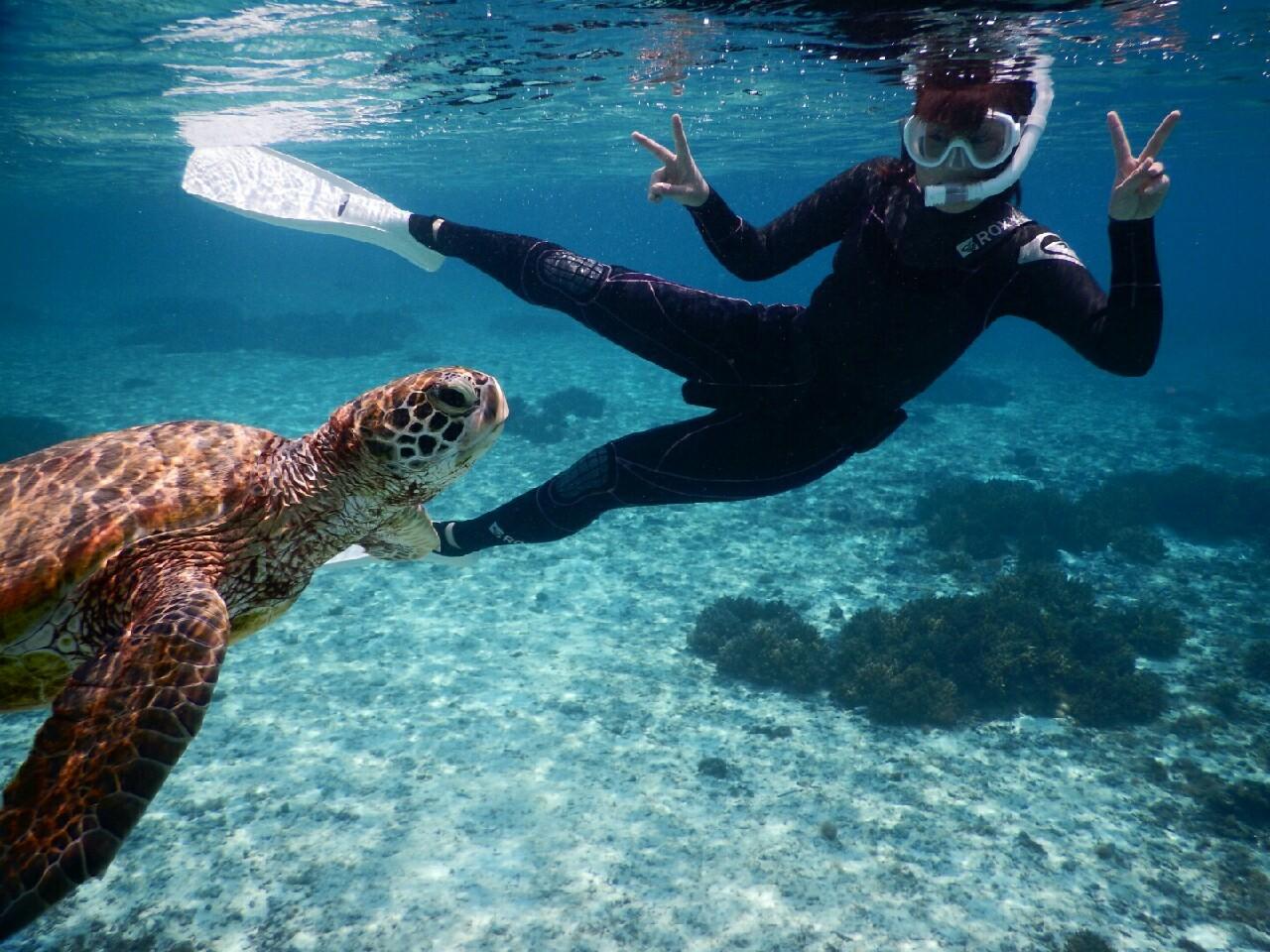 宮古島ウミガメと横泳ぎ