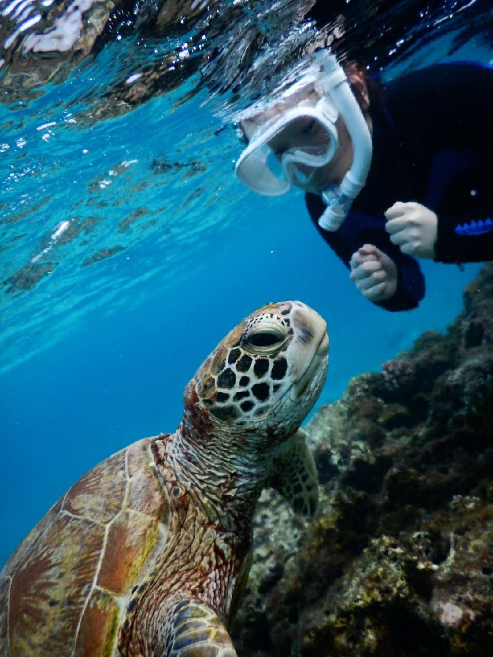 ウミガメとにらめっこした宮古島