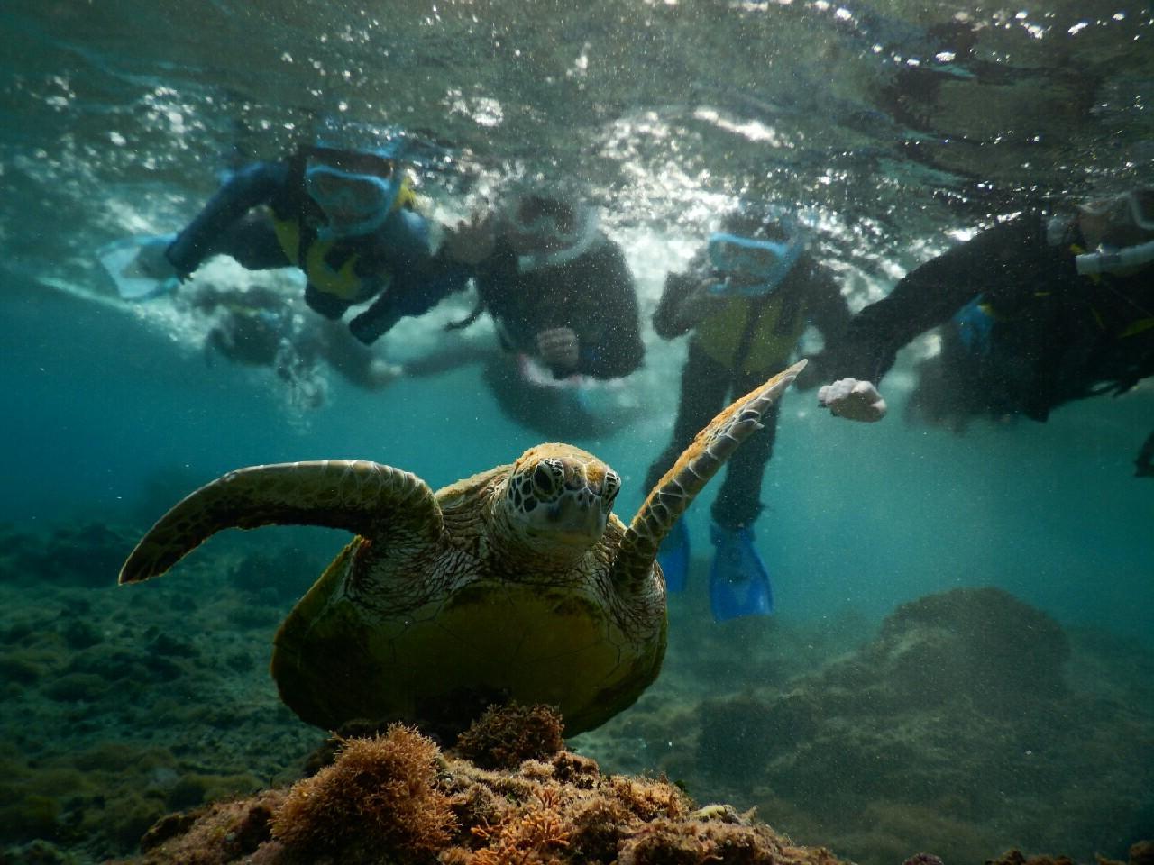 お子様観察中にウミガメに宮古島の太陽がスポットライト