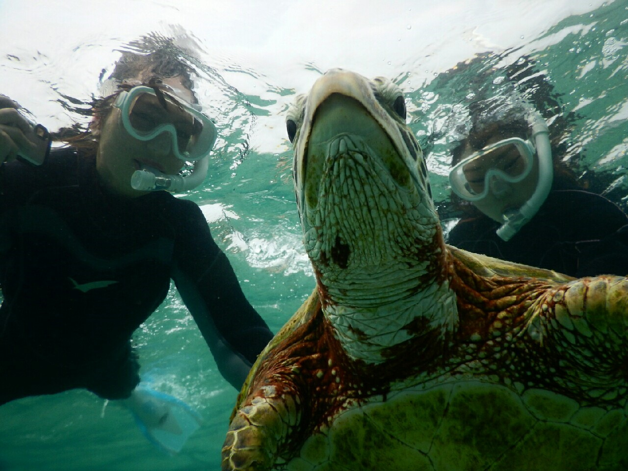 ウミガメを下から撮影