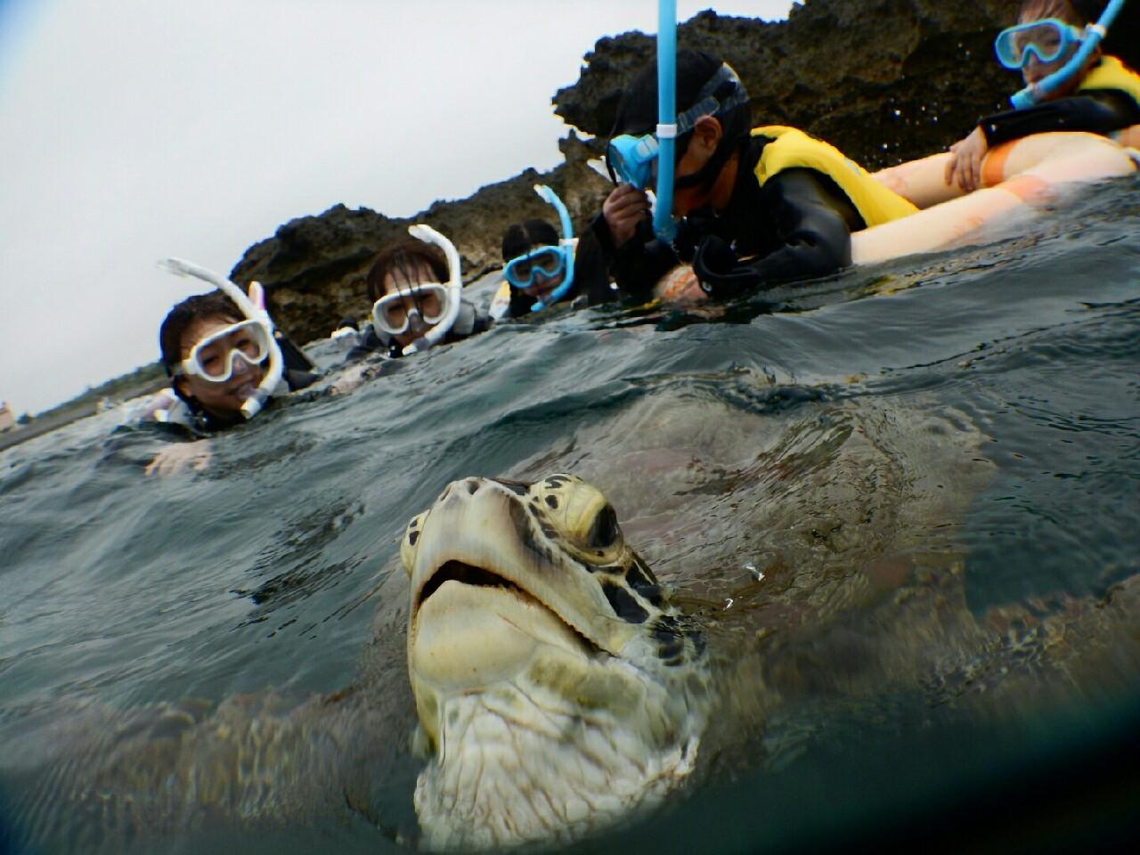 浮き輪でウミガメを見に行ったら息継ぎしてました