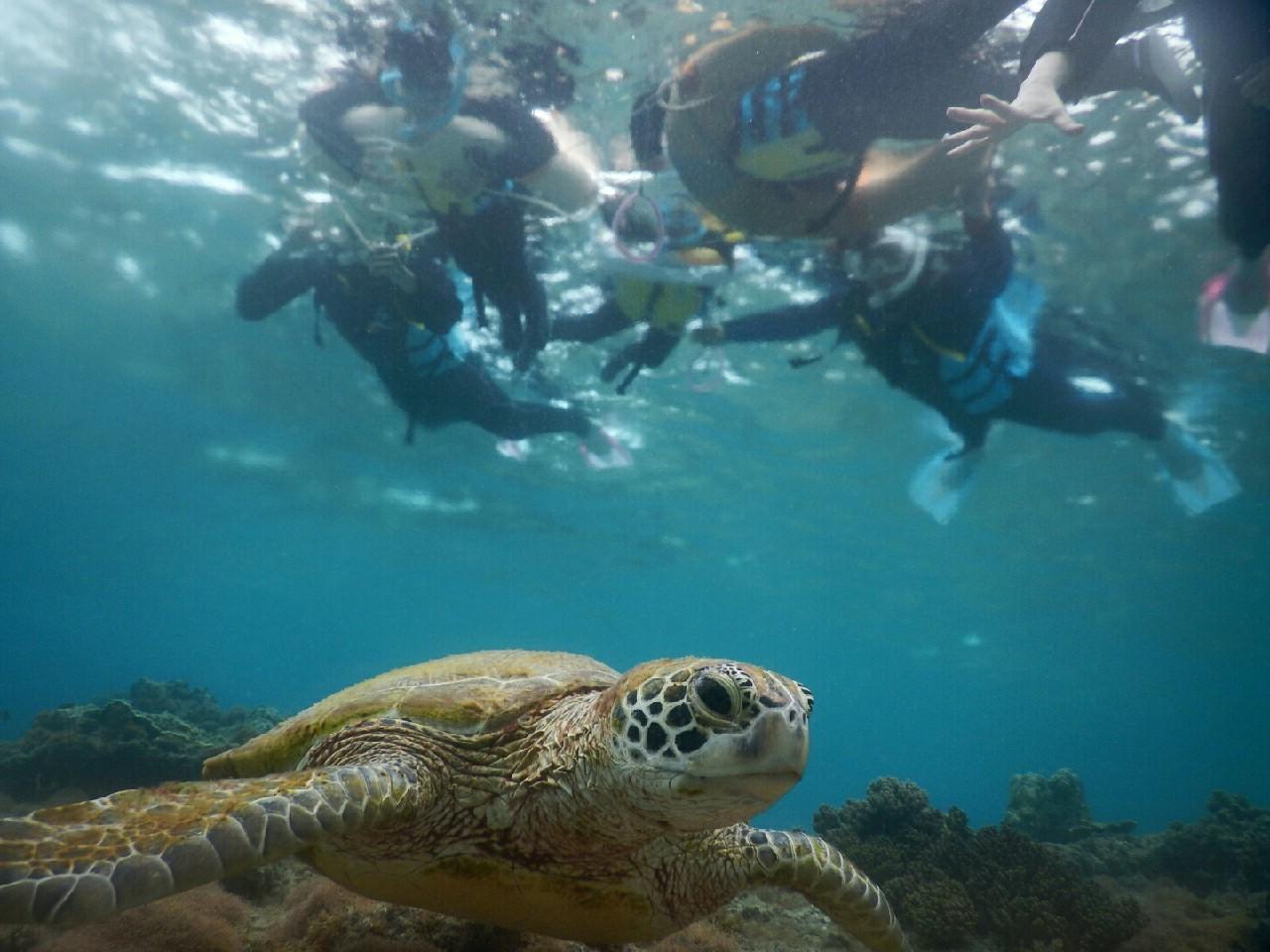 さあ全員でウミガメ見に行きます