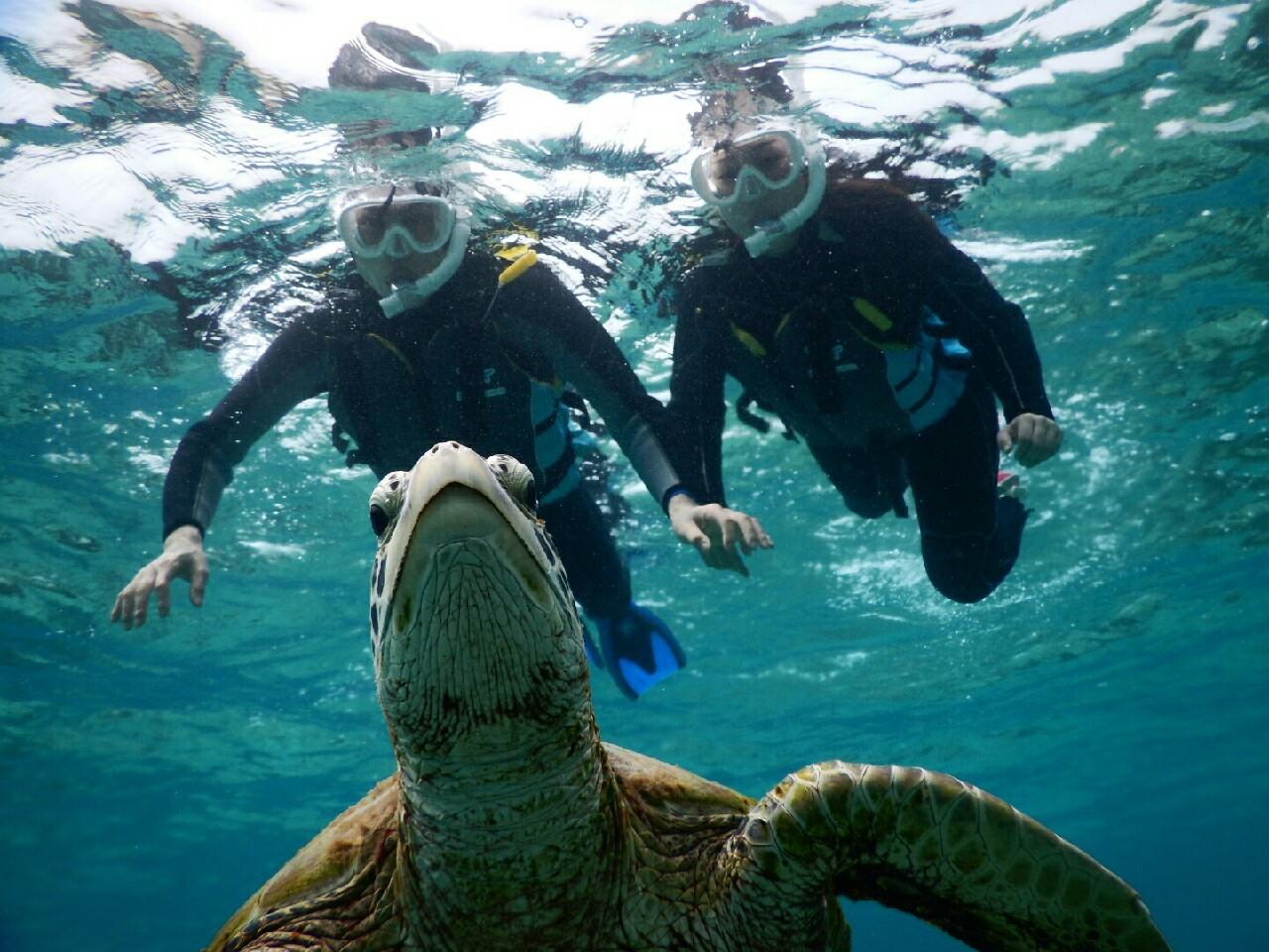 宮古島のウミガメ浮上
