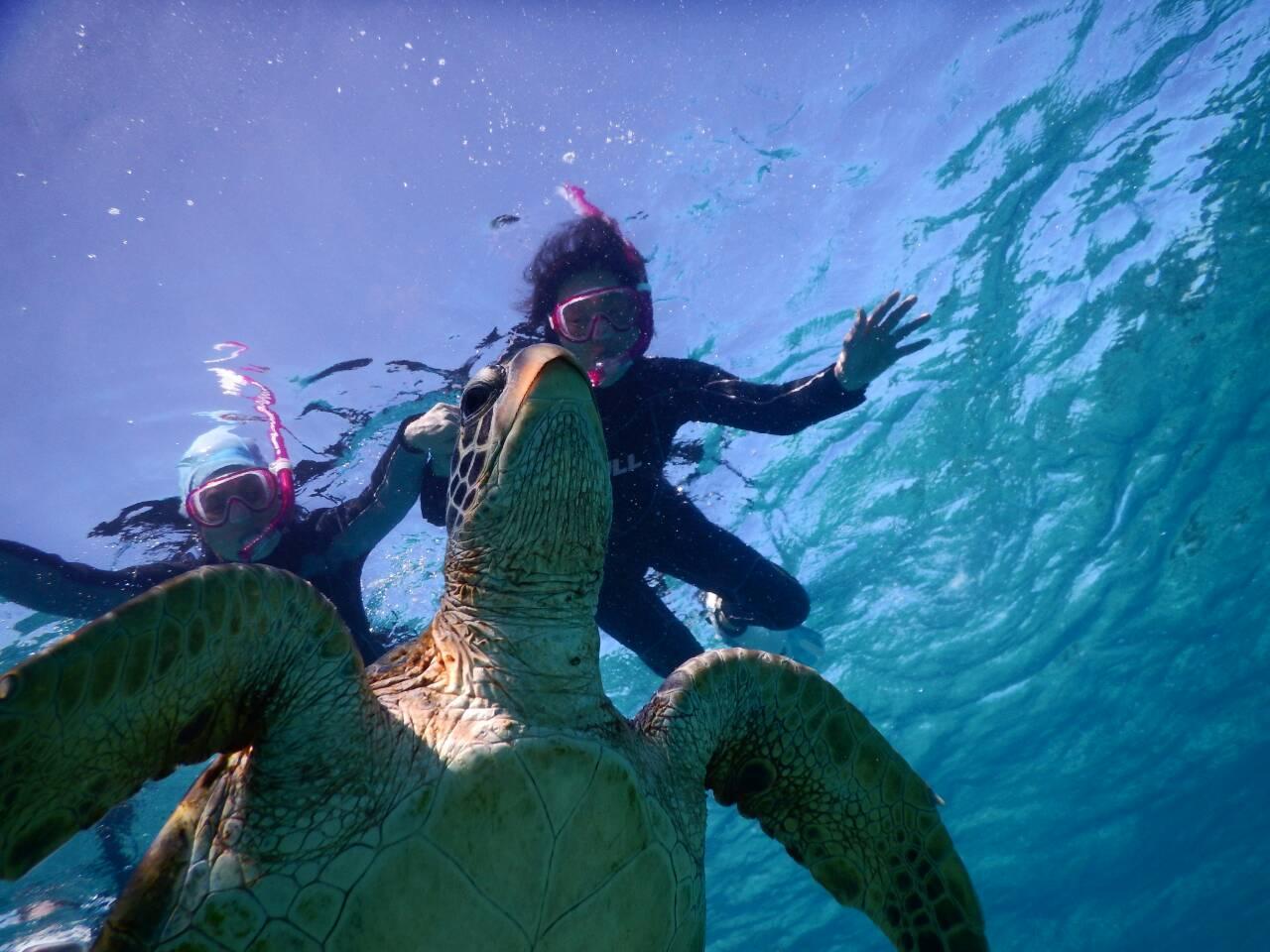 二人で発見ウミガメさん
