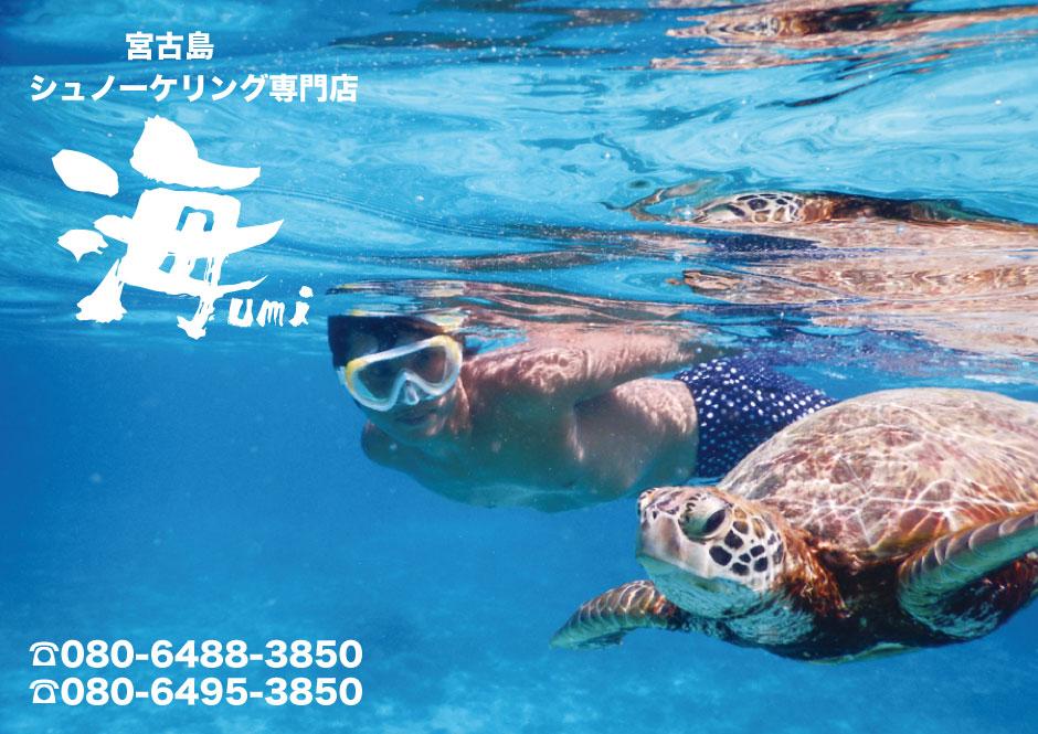 宮古島シュノーケルでウミガメと泳ぐシュノーケルツアー