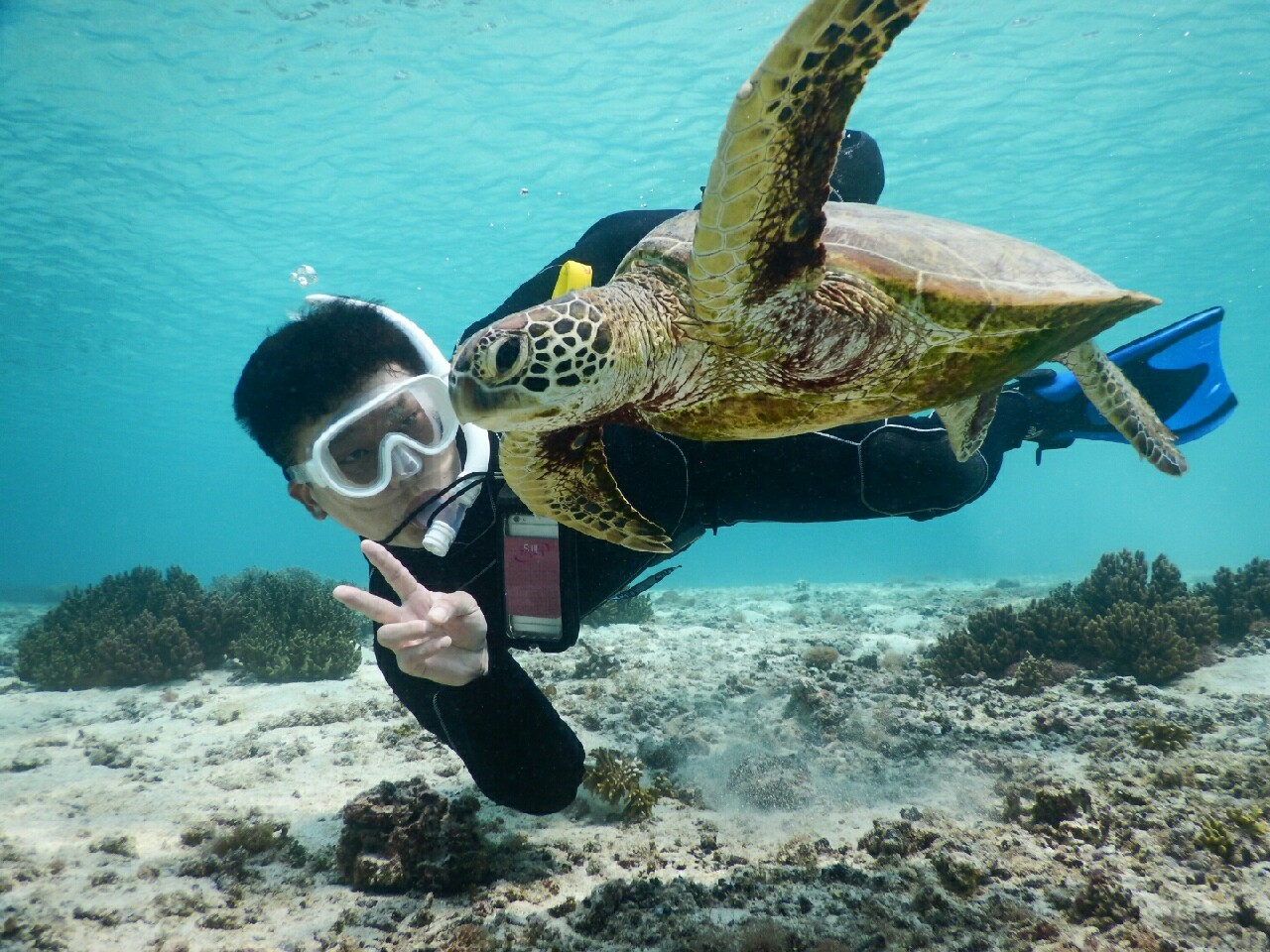 宮古島のウミガメにピース