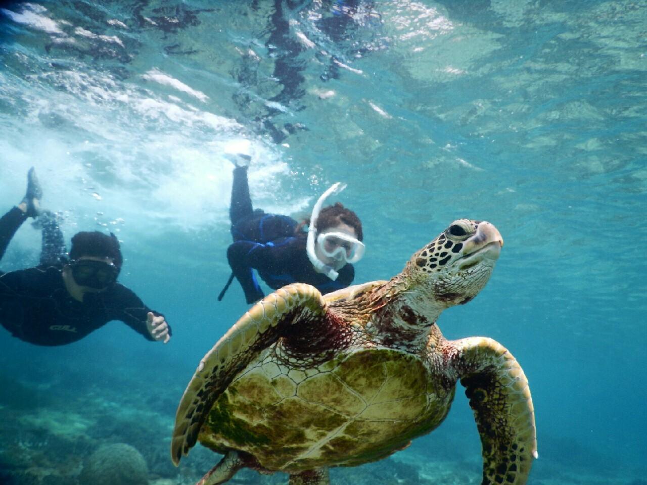潜り潜り宮古島のビーチから