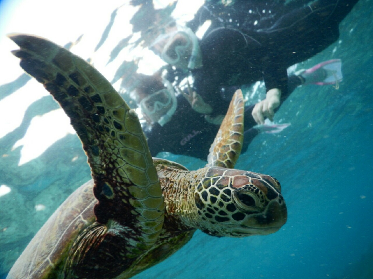 羽ばたけウミガメさん宮古島の海で