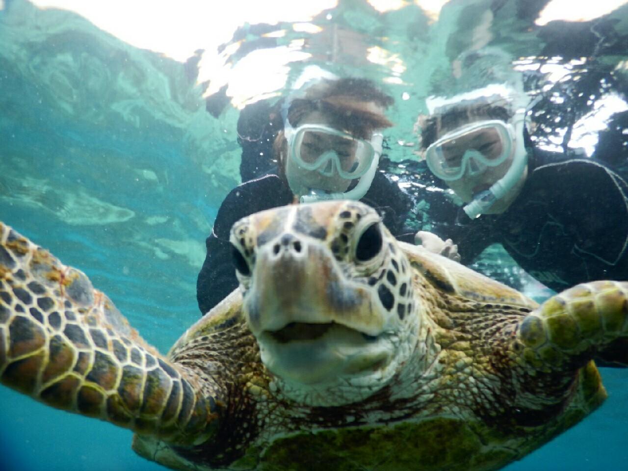 宮古島の笑うウミガメさんシュノーケリング