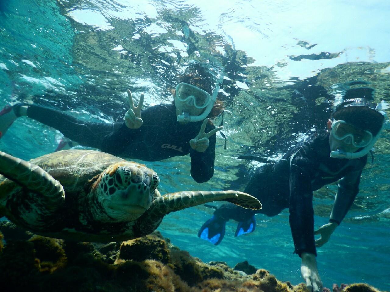 宮古島の大きなウミガメさんと撮影