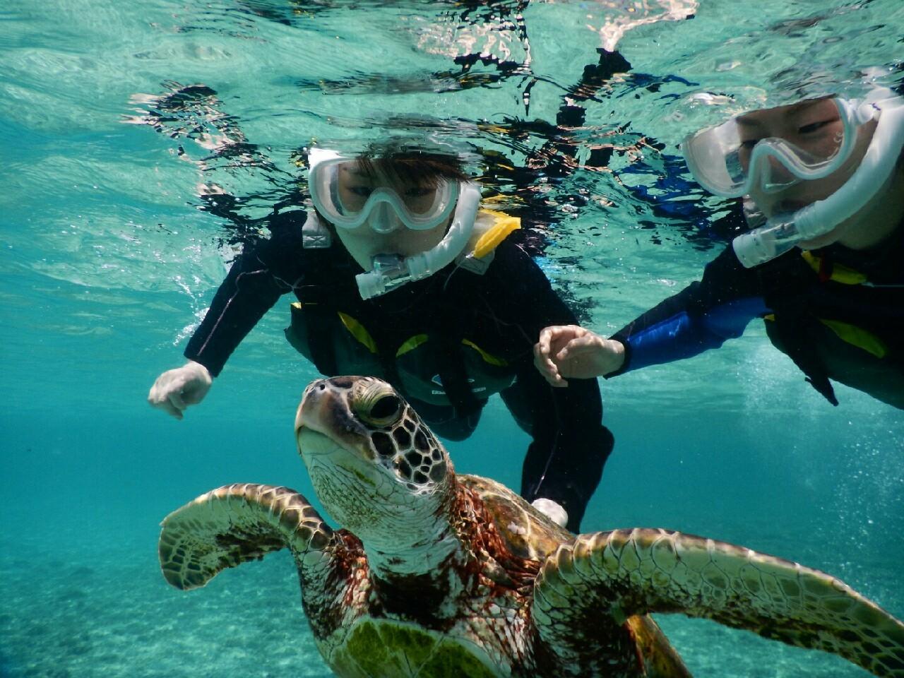 ウミガメに近づくシュノーケリングの喜び