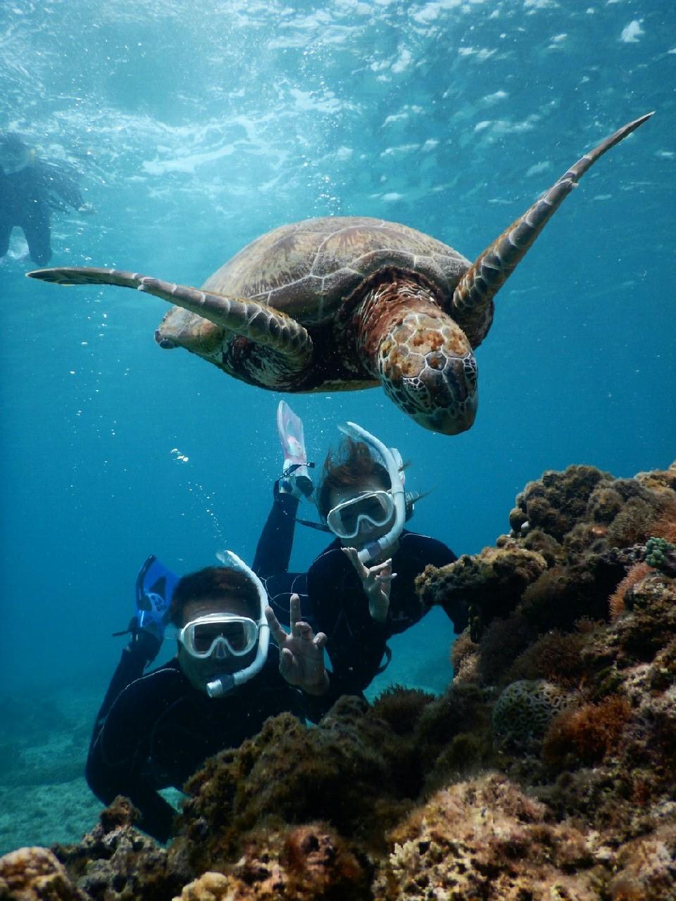 ウミガメと珊瑚の根の下で