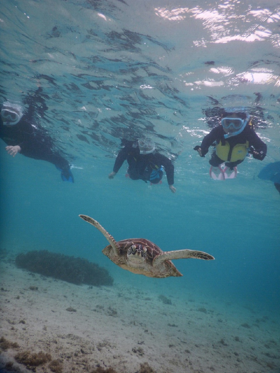 小さなお子様もウミガメに追い付くシュノーケル