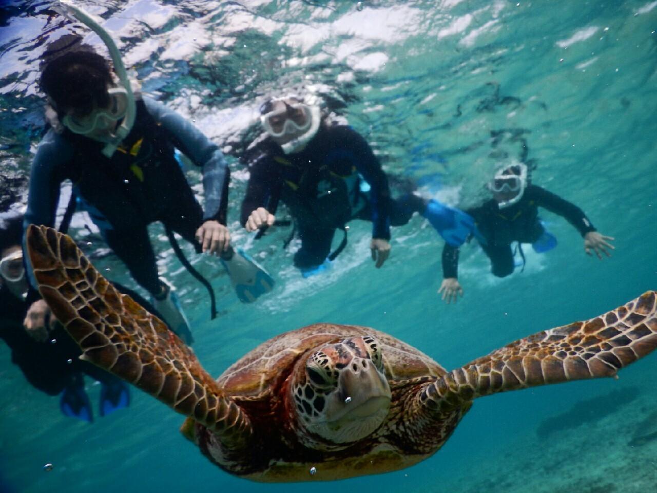 マエヒレ広げたウミガメ