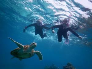 あおい海でアオウミガメ