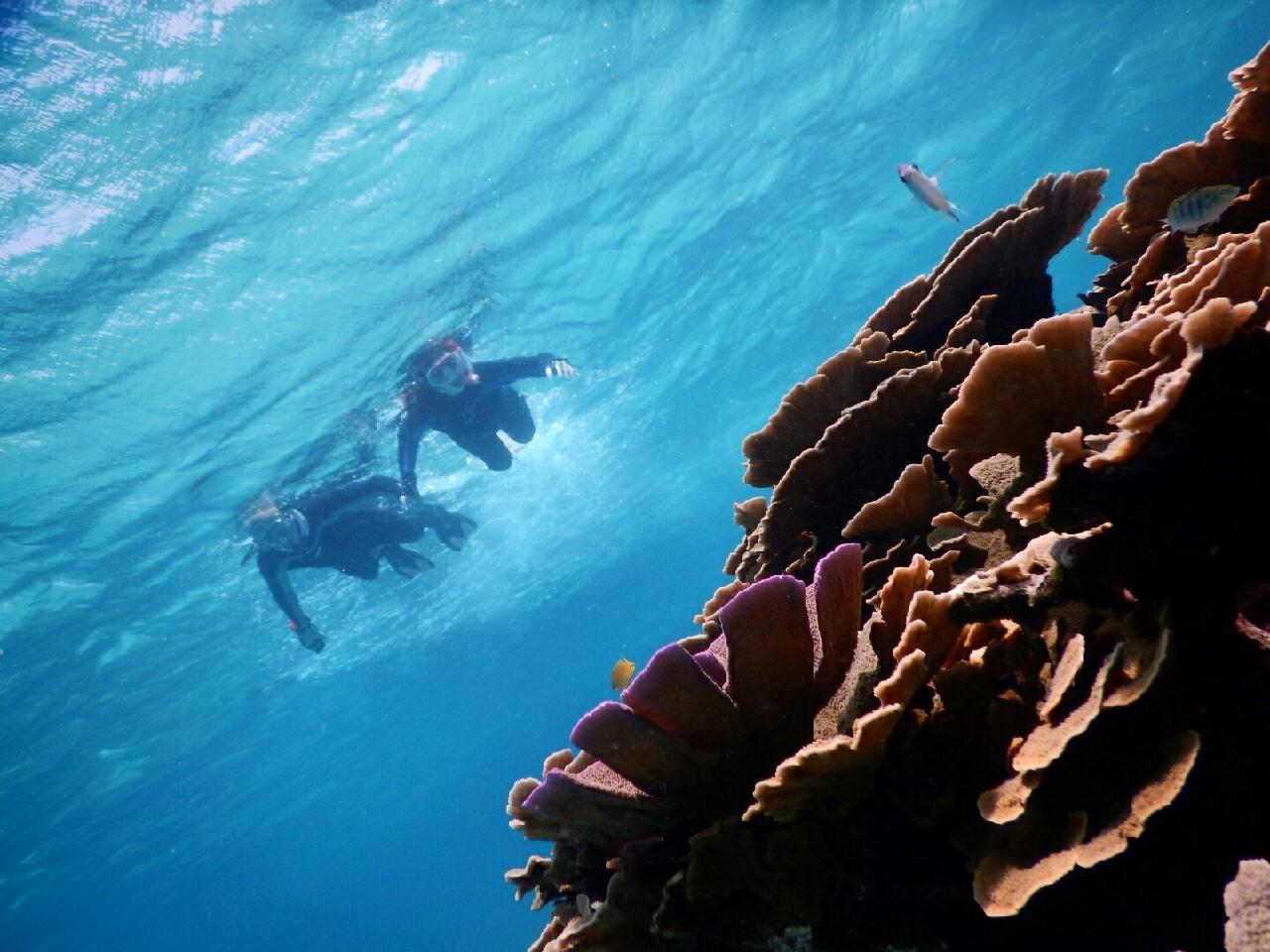 珊瑚礁が美しいシュノーケル