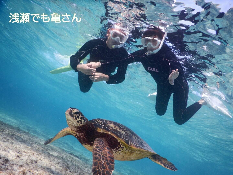 宮古島浅瀬の海でウミガメと遭遇