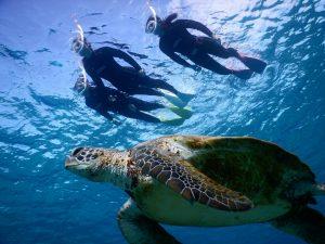 宮古島の海でウミガメに気づかない