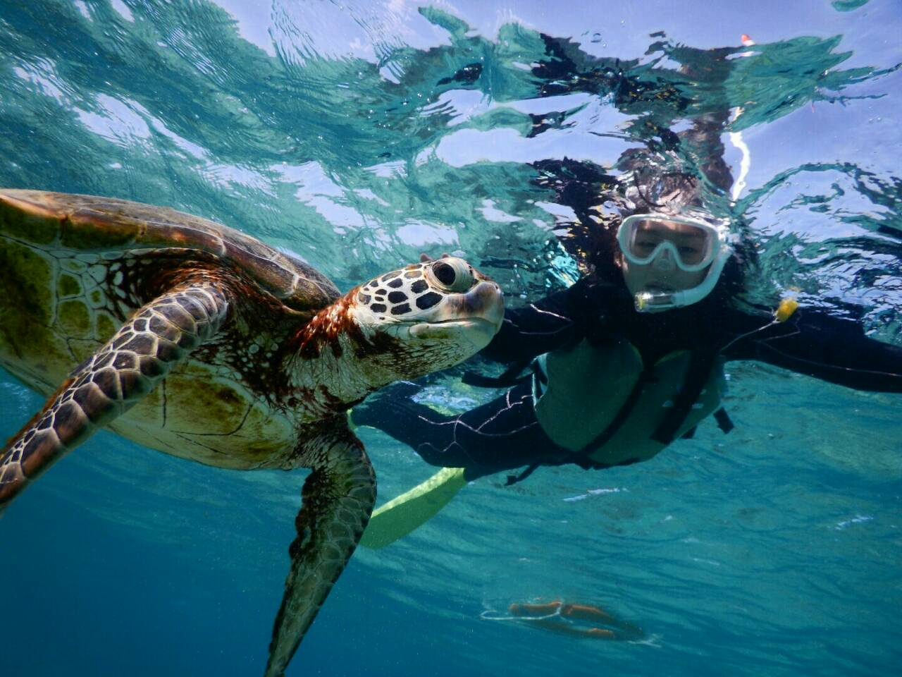 ウミガメと水面でシュノーケル写真