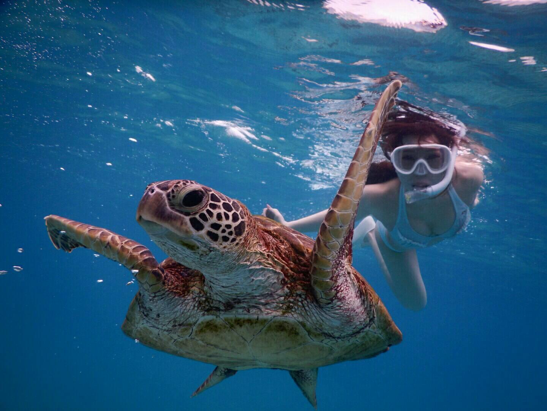 宮古島で躍動感あるウミガメ写真