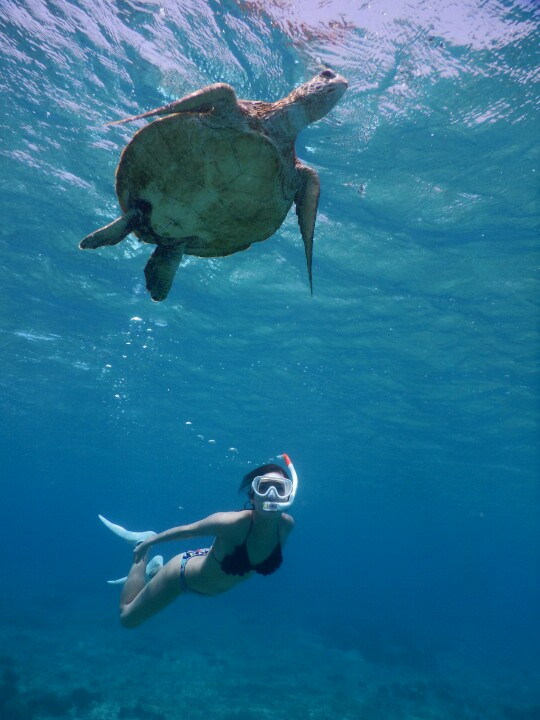 水着でウミガメと宮古島スキンダイビング