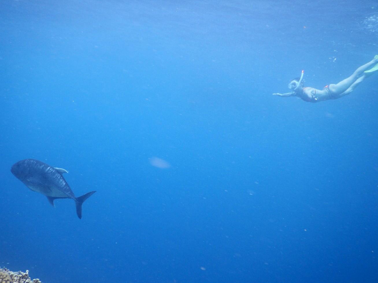 今日はウミガメとシュノーケルとちがうよ