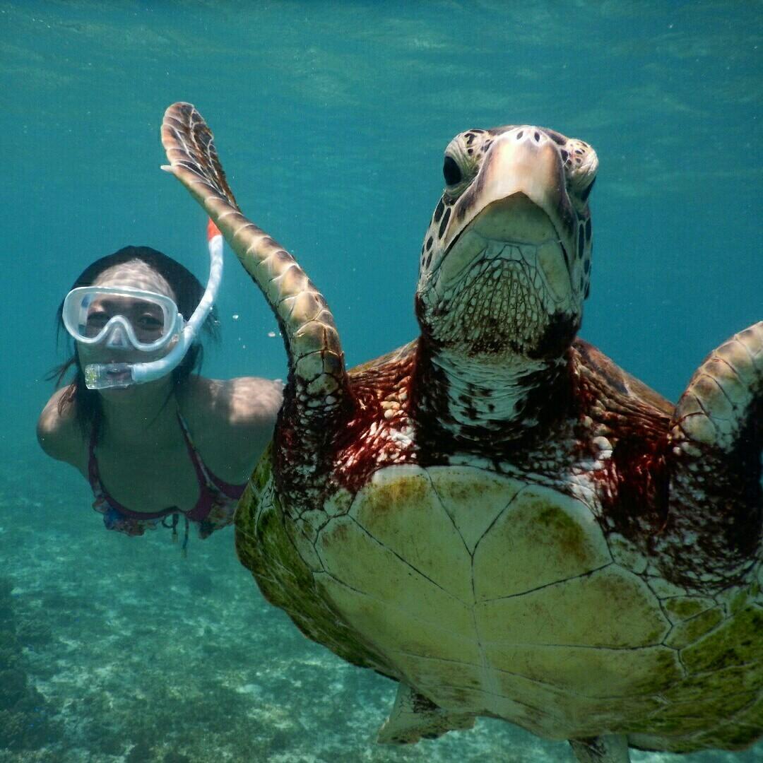 ウミガメとアップ