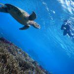 珊瑚とウミガメ同時にシュノーケリング