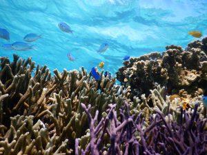 美しい珊瑚を見るならどっちもシュノーケルツアー