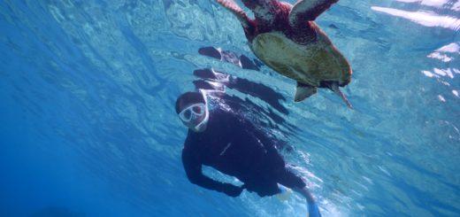 冬の宮古島はウミガメが多いです