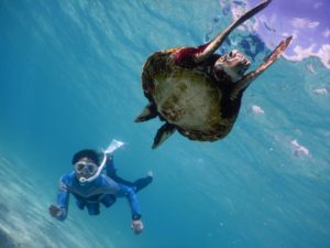 ウミガメさんがバンザイするほど綺麗な宮古島の冬の海