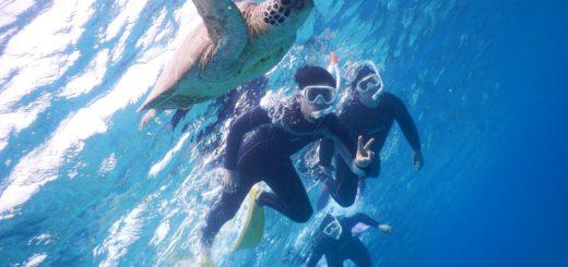 宮古島の社員旅行でもウミガメを