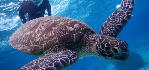 雨の宮古島はウミガメと泳ぐべきですね